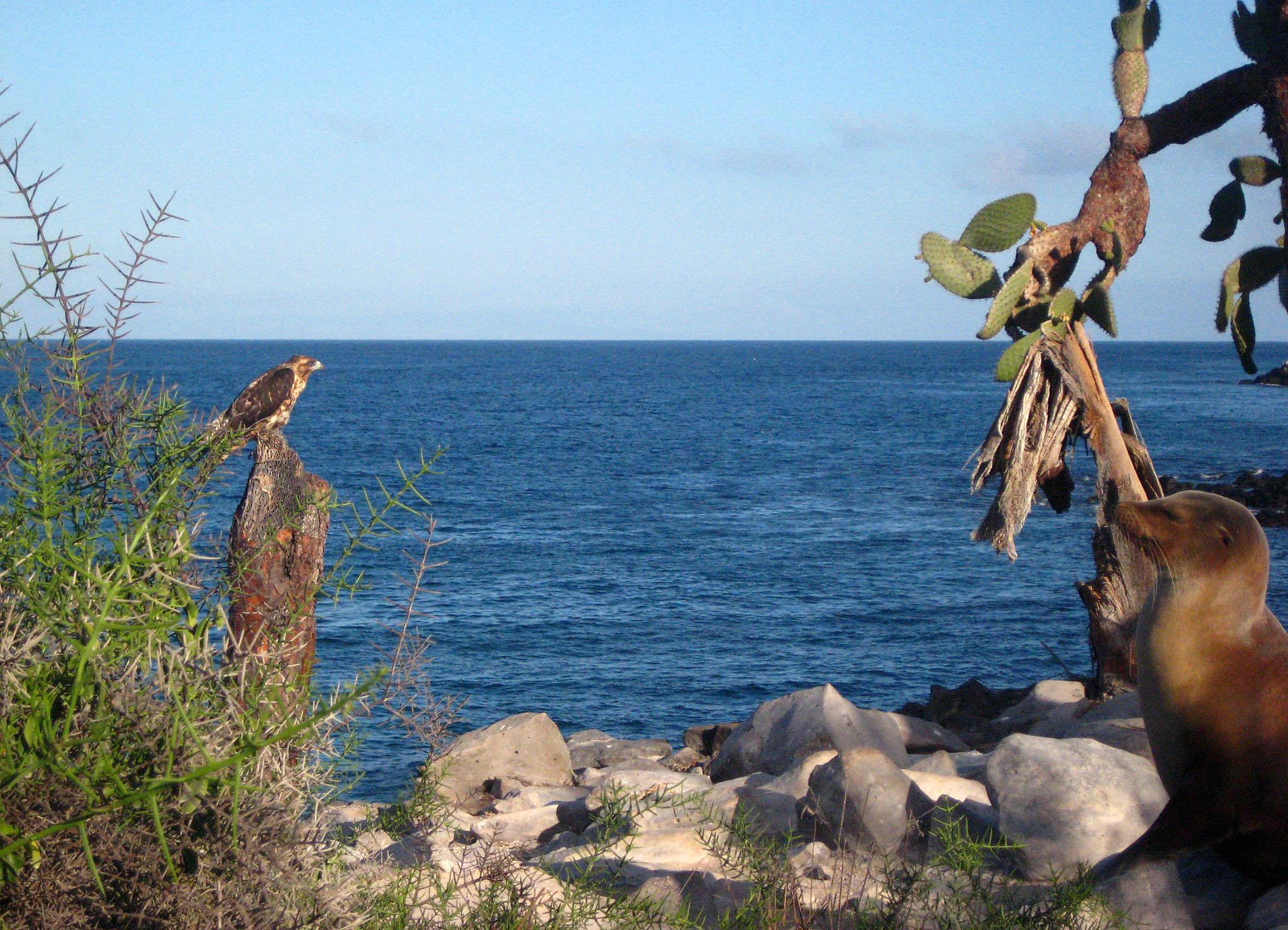 Adler und Seelöwe auf der Insel Santa Cruz, Galápagos
