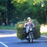 Mit den Mopeds wird alles Mögliche transportiert: Getreide, Pflanzen, Heu, Hunde, Bauelemente ...