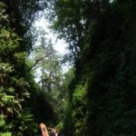 amerika-redwoods-1