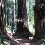amerika-redwoods-3